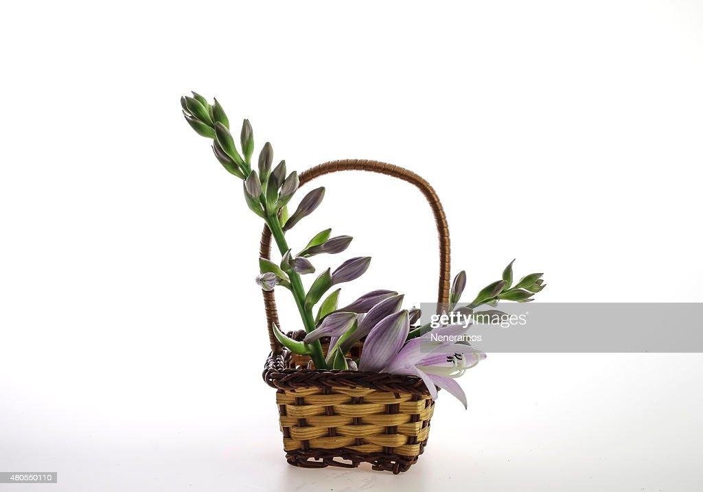 Coloridas flores en una pequeña cesta de mimbre : Foto de stock