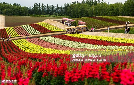 Colorful Flowers In Field