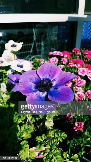 Colorful Flowers In Lawn