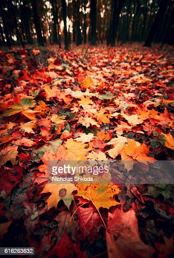 Colorful foliage in the autumn park wide-angle : Stock Photo