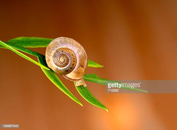 Colorful glossy snail resting on leafs