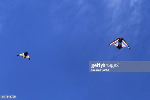 Colorful kites in flight