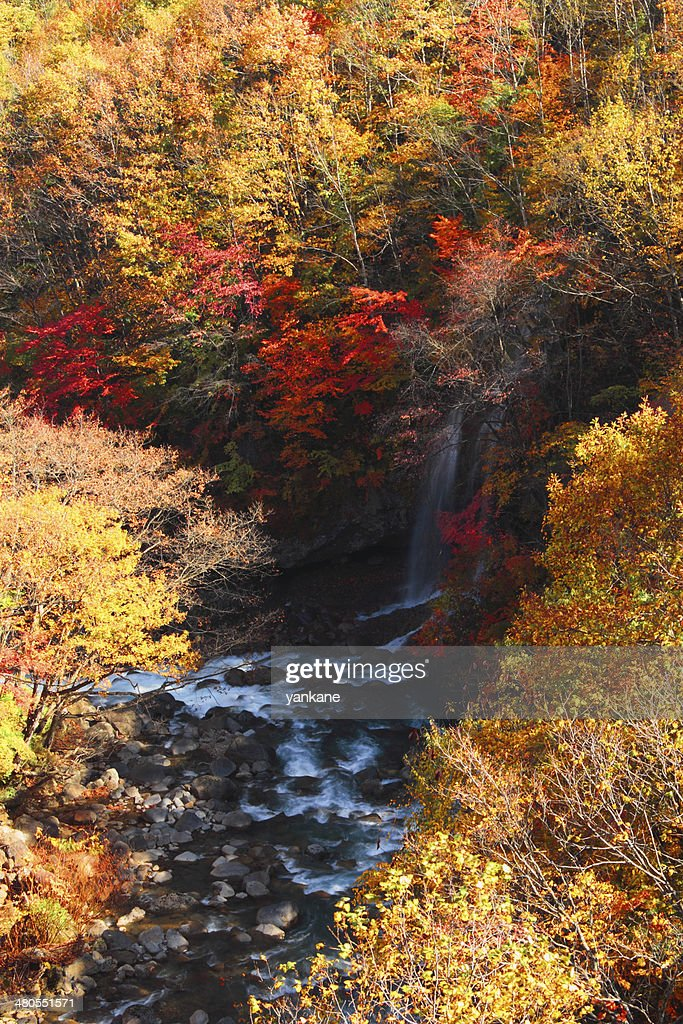 Coloridas hojas en Gully Matsukawa : Foto de stock