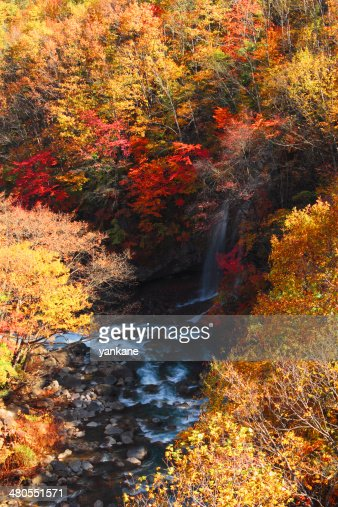 colorful  leaves in Gully  Matsukawa : Stock Photo