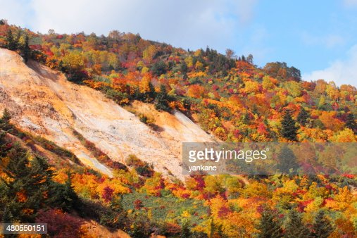 colorful  leaves in Hachimantai : Stock Photo