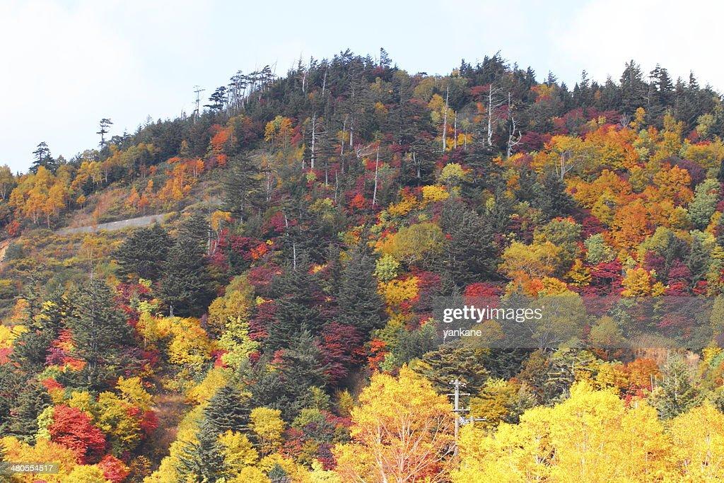 Folhas coloridas em Hachimantai : Foto de stock