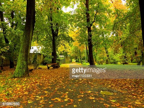 Colorful leaves on deciduous trees and walkway during autumn : Stock Photo