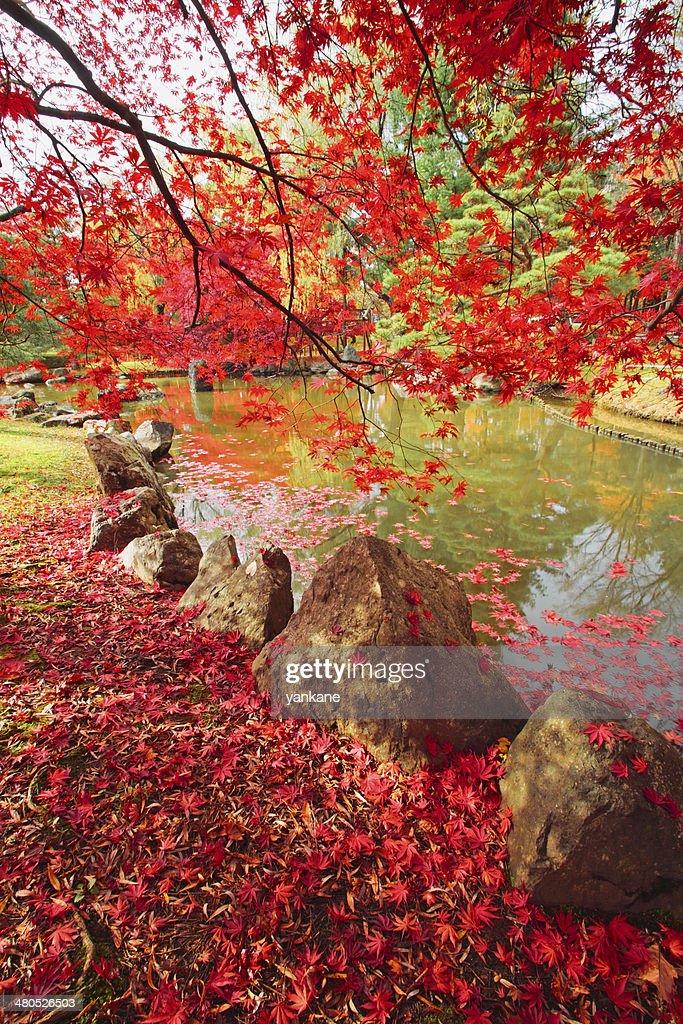 Colorato foglie : Foto stock