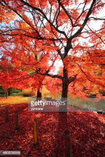 colorful  leaves : Stockfoto