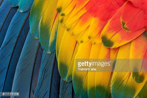 Colorful Macaw Plumage : Stock Photo