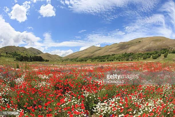 Prato colorato in Abruzzo, Italia montagne