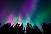 Beautiful northern lights in the sky above trees