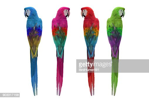 Colorful of macaw : Stock Photo