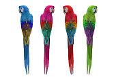 Colorful of macaw birds isolated on white background