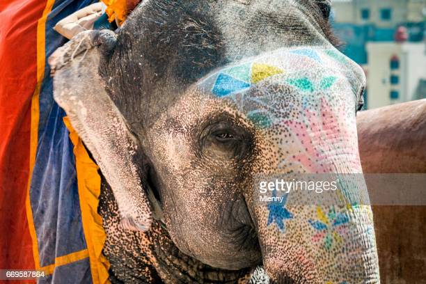 Colorful painted Elephant in India