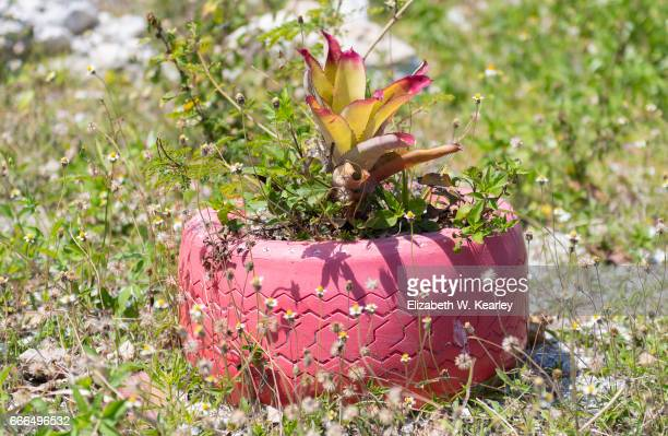 Colorful Painted Tire Planter in Exumas