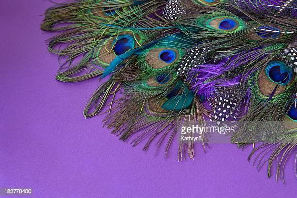 Coloré de plumes