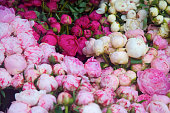 pink, purple and white peonies at the farmer's market