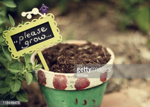 Colorful plant pot with soil : Stock Photo