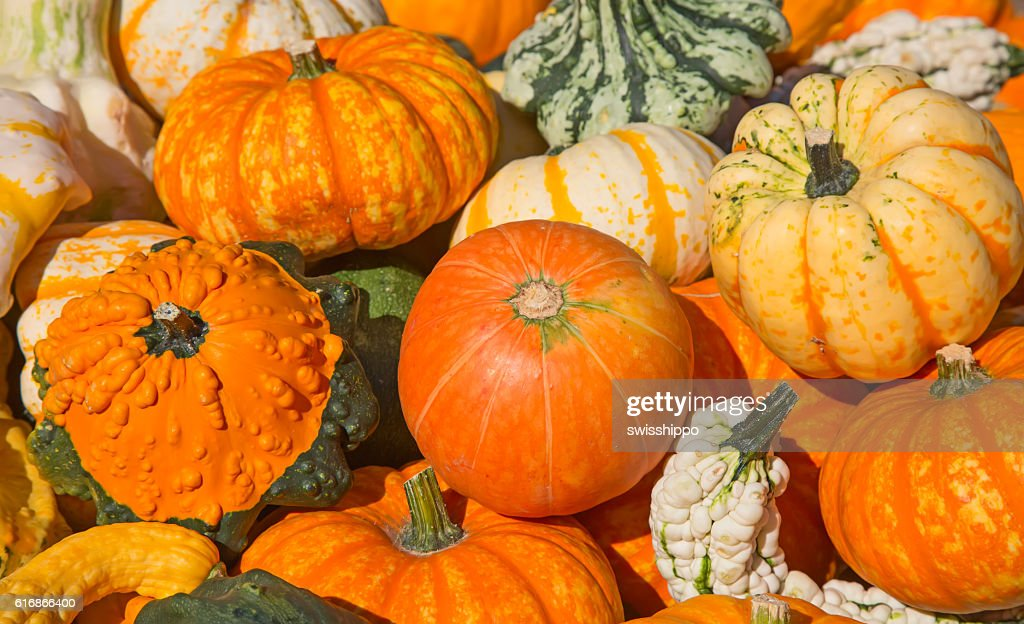 Colorful pumpkins : Stock Photo
