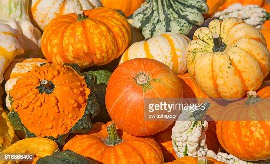 Colorful pumpkins : Stock Photo