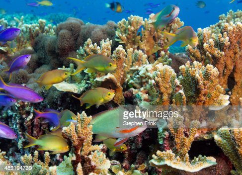 Colorful reef scene.