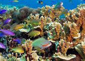 Colorful reef scene.