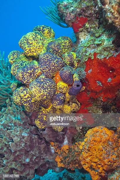 colorful reef with copy space