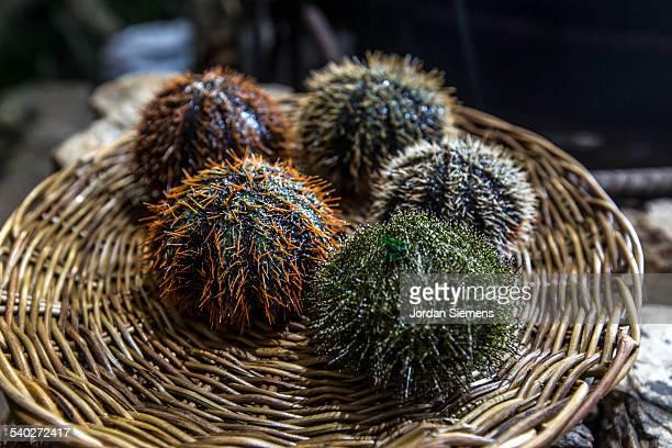 Colorful sea urchins.