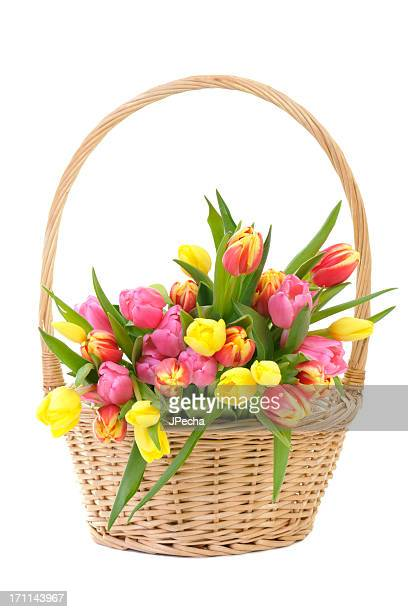 Coloridos tulipanes de primavera en cesta de mimbre Aislado en blanco