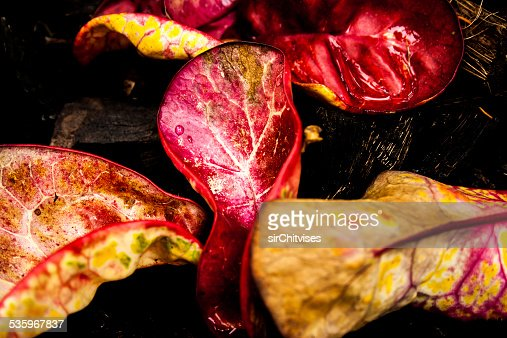 Colorful summer leaves. : Stock Photo