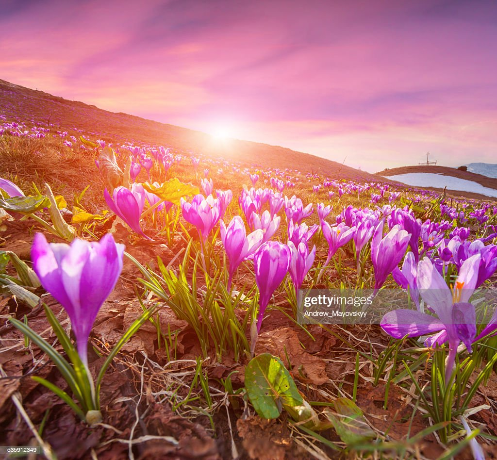 Colorful sunrise in the spring mountains : Stock Photo