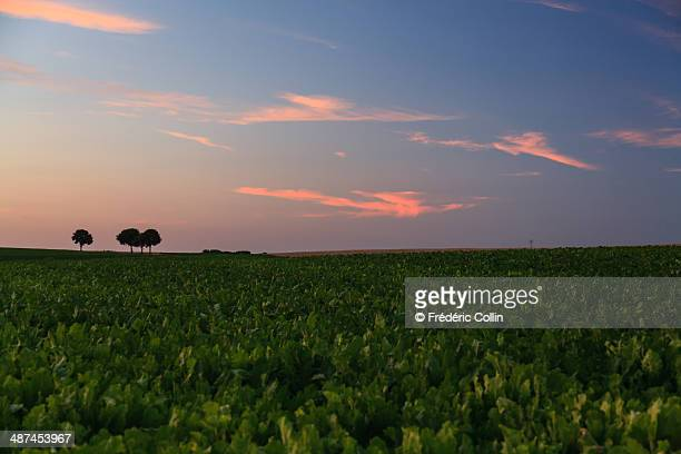 Colorful sunset in the countryside