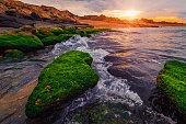 Colorful sunset on the sea shore with green algae