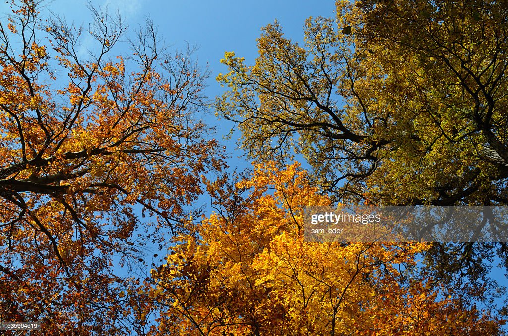 colorful trees and blue sky : Stock Photo