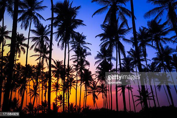 Colorful tropical coconut trees at sunrise