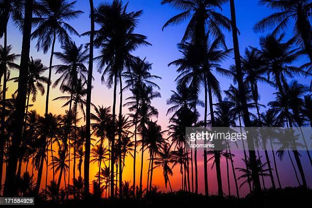 Bunte tropische Kokospalmen bei Sonnenaufgang