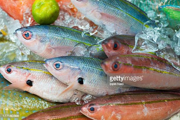 Colorful tropical fish at market, Japan
