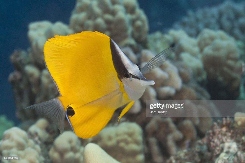 Colorful tropical fish on Pacific coral reef : Stock Photo