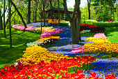 Assorted kind of colourful beautiful tulip and lavender flowers at Emirgan public park on sunny day spring season in Istanbul, Turkey