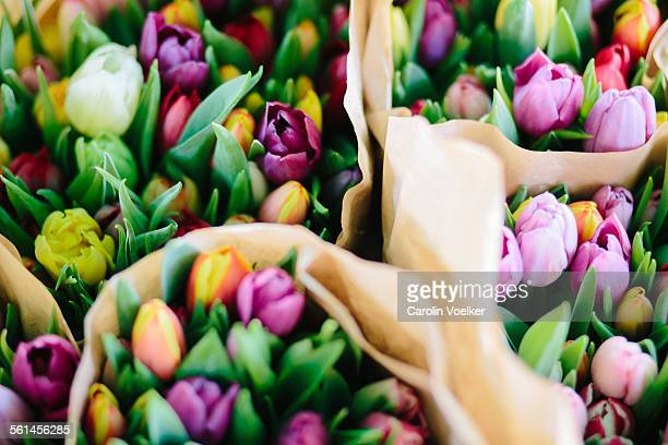 Colorful tulips at Naschmarkt