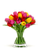 Beautiful and colorful tulips in a glass vase isolated on white background.