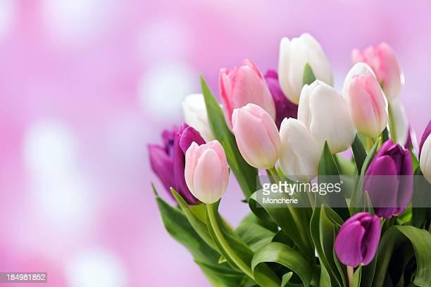 Bunte Tulpen auf der beleuchteten Hintergrund