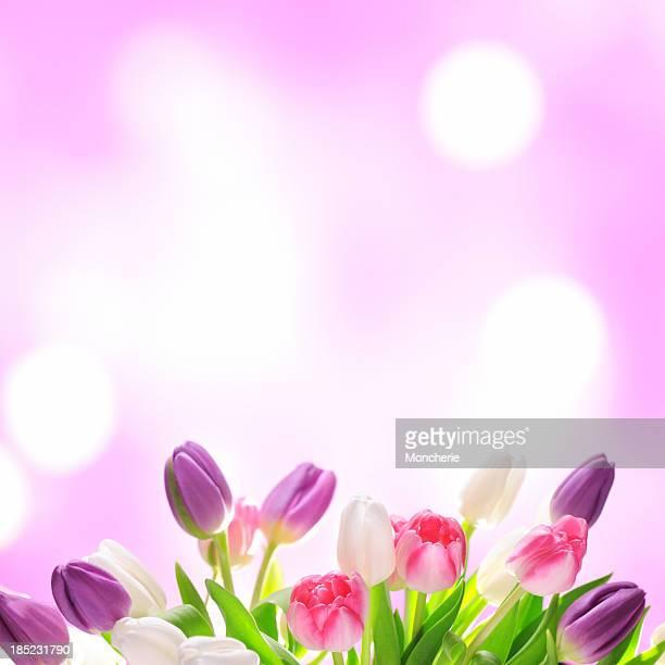 Colorful tulips on twinkled illuminated background