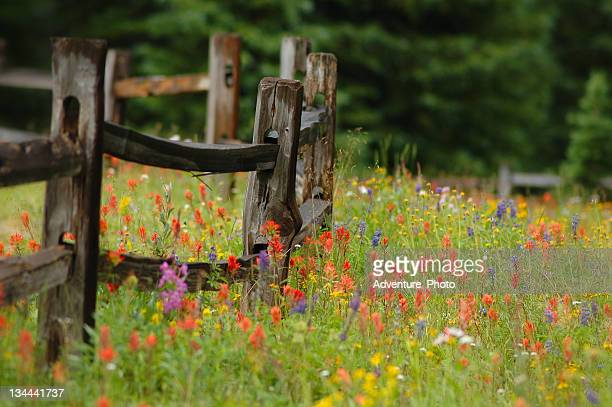Colorful Wildlowers in Alpine Flower Meadow with Wood Fence