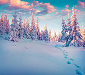 Colorful winter sunrise in the Carpathian mountain forest. Ukraine, Europe. Instagram toning.