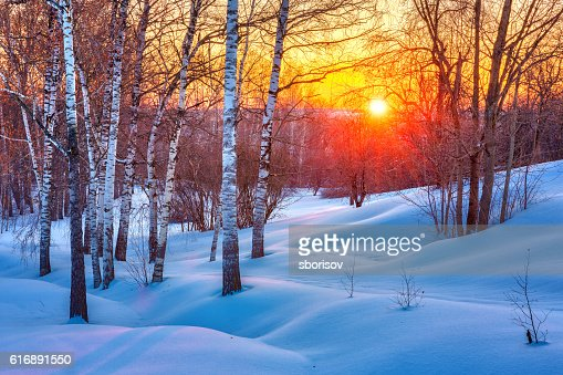 Colorful winter sunset : Stock Photo