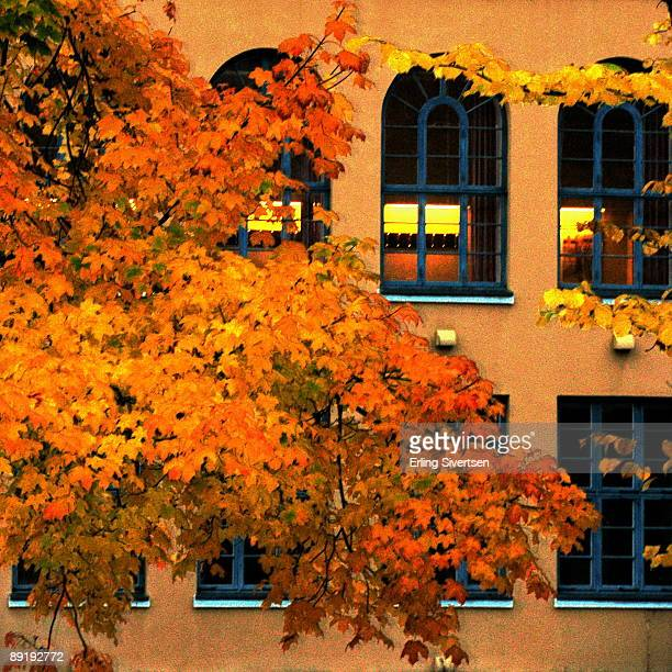 Colors of fall in Volda