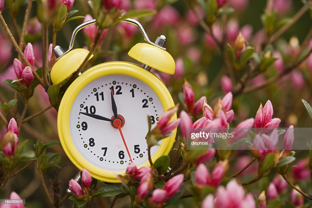 Colors of spring : Stock Photo
