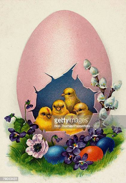 Colour illustration Easter postcard circa 1910 Five easter chickens sitting in a broken egg